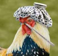 Как определить птичий грипп у кур