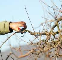 Обрезка яблони: когда и как правильно ее делать — отвечаем на вопросы дачников