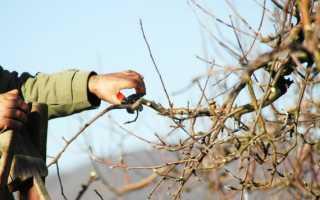 Обрезка яблонь весной: видео
