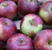 Яблоня Спартан — описание сорта, фото, отзывы