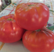 Томат Оаксаканская Драгоценность — описание сорта, отзывы, урожайность