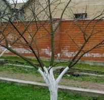 Обработка сливы от вредителей после цветения: советы садоводам
