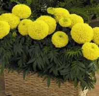 Выбираем цветы для солнечного балкона или подоконника