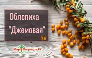 Облепиха Джемовая — описание сорта, фото и отзывы садоводов