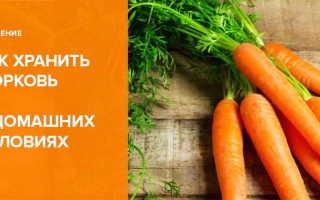 Как правильно хранить морковь дома?