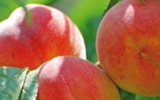 Персик Кардинал — описание сорта и отзывы садоводов