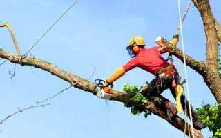 Кронирование деревьев и обрезка сухих веток: особенности, требования и нормы