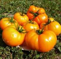 Томат Оранжевый Гигант — описание сорта, отзывы, урожайность