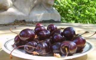 Черешня Одринка — описание сорта, фото, отзывы садоводов