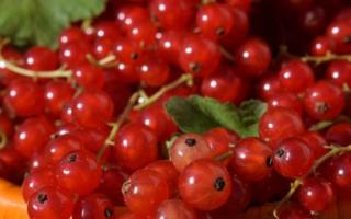 Как сажать красную смородину осенью?