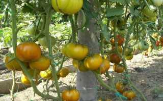 Томат Малахитовая Шкатулка — описание сорта, фото, урожайность и отзывы садоводов