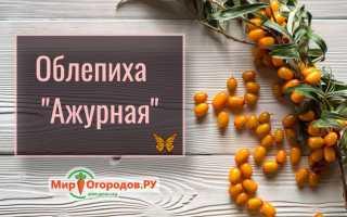 Облепиха Ажурная — описание сорта, фото и отзывы садоводов
