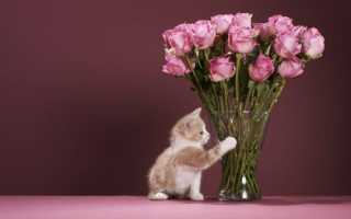 Как дольше сохранить розы в вазе: 9 практических советов