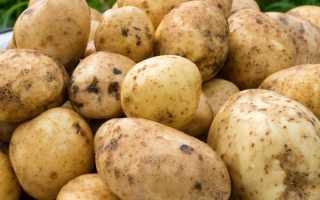 Картофель сантэ: описание и выращивание
