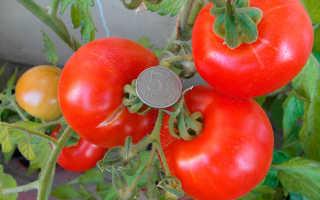Томат Аляска — описание сорта, отзывы, урожайность