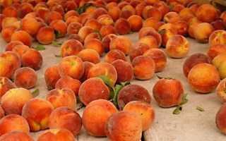 Когда начинается сезон персиков?