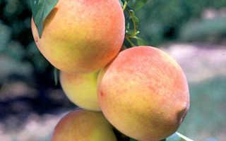 Обрезка колоновидного персика