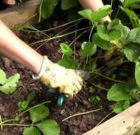 Обработка весной садовой земляники