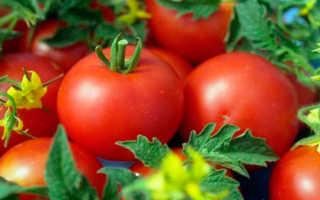 Томат Анюта — описание сорта, отзывы, урожайность
