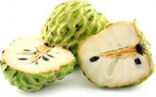 Экзотический уникальный фрукт аннона: выращивание, состав, как употреблять