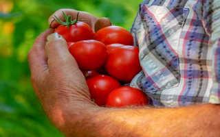 Лучшее время для посадки помидоров на рассаду (лунный календарь, климат, рекомендации производителей)