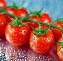 Поливать ли помидоры в период созревания?