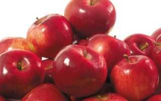 Яблоня Анис — описание сорта, фото, отзывы