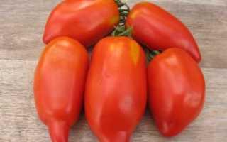 Как вырастить томат перцевидный, особенности посадки и ухода за растением