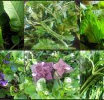 Дикорастущие травы: названия и фото