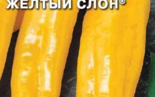 Перец Желтый Слон — описание сорта, фото, отзывы, посадка и уход