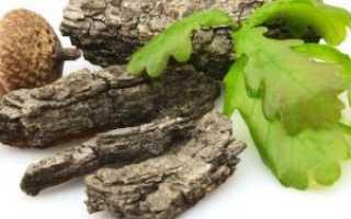 Кора дуба: полезные свойства и показания к применению