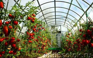Как сажать помидоры в теплице?