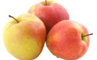 Лучшие рецепты заготовки яблок на зиму