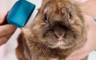 Болеют ли кролики бешенством?