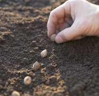 Украина посадит ранние зерновые культуры на 2,4 млн га