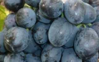 Виноград Руслан: описание сорта, фото и отзывы садоводов