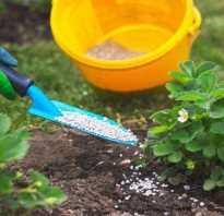 Весенние удобрения для земляники