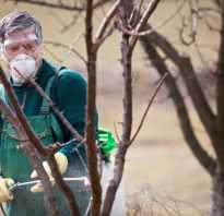 Обработка яблонь осенью от болезней и вредителей: секреты садоводов