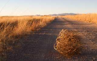 Индия может стать рекордсменом по сбору пшеницы