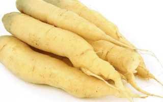 Сорта белой моркови, калорийность, польза и вред