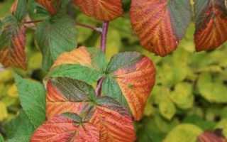 Удобрения для малины осенью