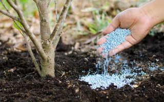 Подкормка вишни весной: секреты садоводов