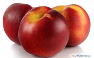 Отличия нектаринов и персиков