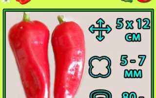 Перец сладкий Белозерка — описание сорта, фото, отзывы, посадка и уход
