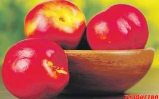 Персик Фрост — описание сорта и отзывы садоводов