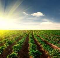 Прогнозы урожайности картофеля на 2020 год