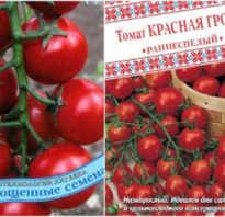 Томат Сладкая Гроздь — описание сорта, отзывы, урожайность