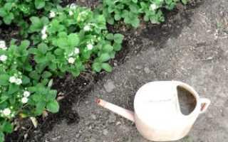 Чем подкормить клубнику перед цветением?