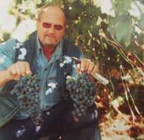 Когда укрывать виноград на зиму в Воронеже?