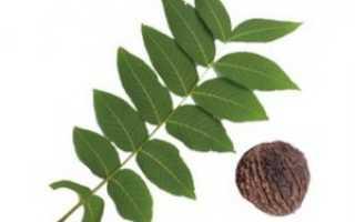 Листья черного ореха: описание, состав, полезные свойства
